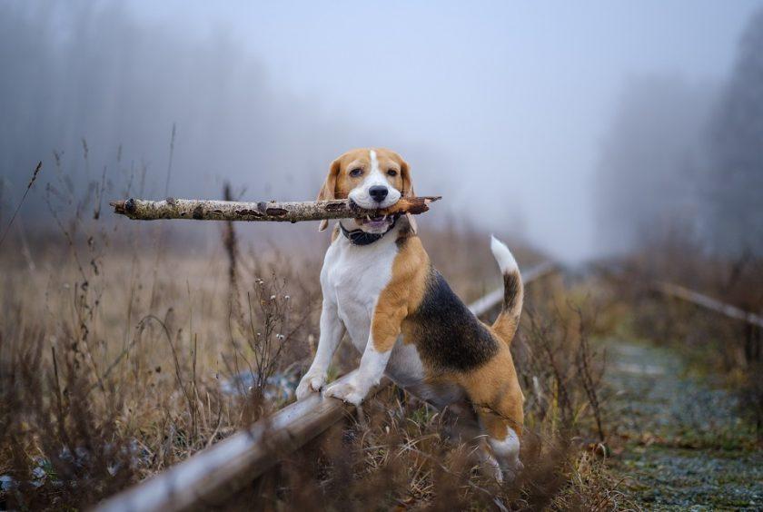 Pâtée ou croquette pour chien : que choisir ?